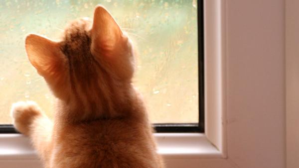 C mo evitar la condensaci n en las ventanas silmaplast - Evitar condensacion ventanas ...